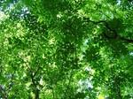 分杭峠の木々